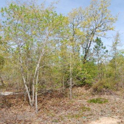 Over 8 acres near Gaston